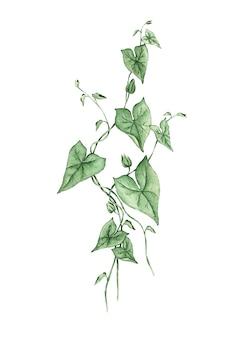 Liana tak met bladeren aquarel geschilderd op een witte achtergrond