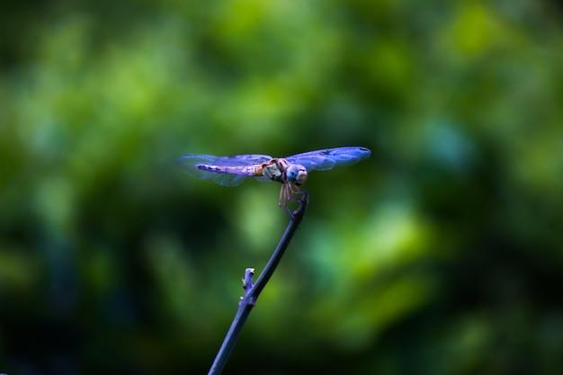 Libel neergestreken op een stengel op een prachtige natuurachtergrond