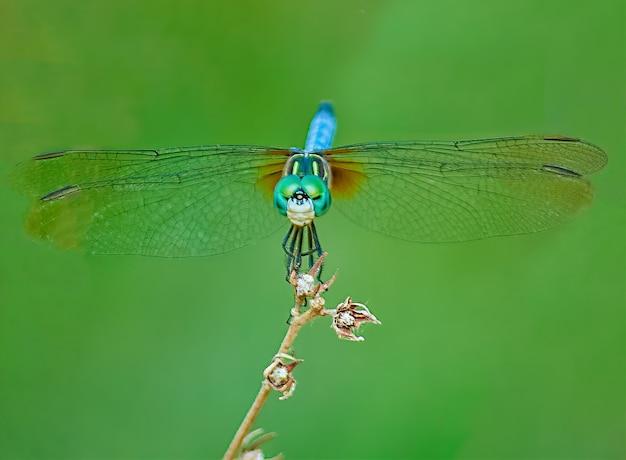 Libelle op een tak