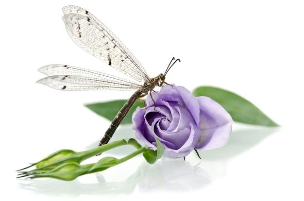 Libelle zittend op een bloem