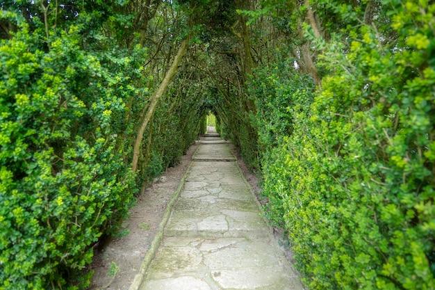Licht aan het einde van de tunnel. groene natuurlijke tunnel van bomen in het park