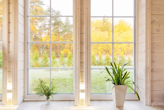 Licht interieur van de kamer in houten huis met een groot raam met uitzicht op de binnenplaats van de herfst. gouden herfstlandschap in wit venster. huis en tuin, herfstconcept. plant sansevieria trifasciata