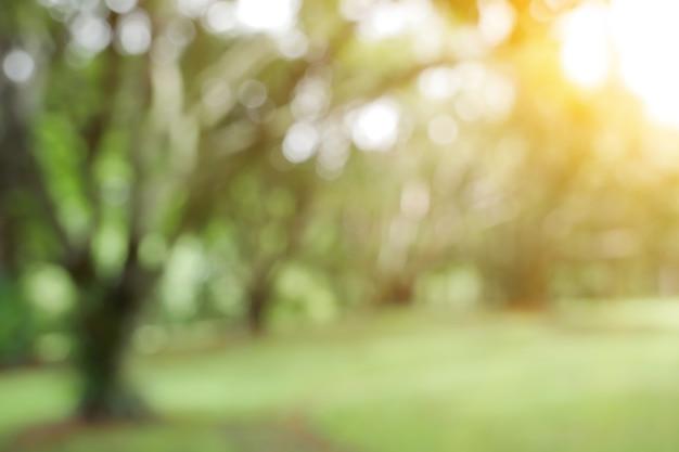 Licht van de zon raakt groene bokeh. waardoor de bokeh-onscherpte overdag een prachtige schittering van natuurlijk gebladerte heeft