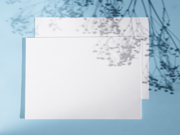 Lichtblauwe achtergrond met twee witte spaties en takken schaduwen