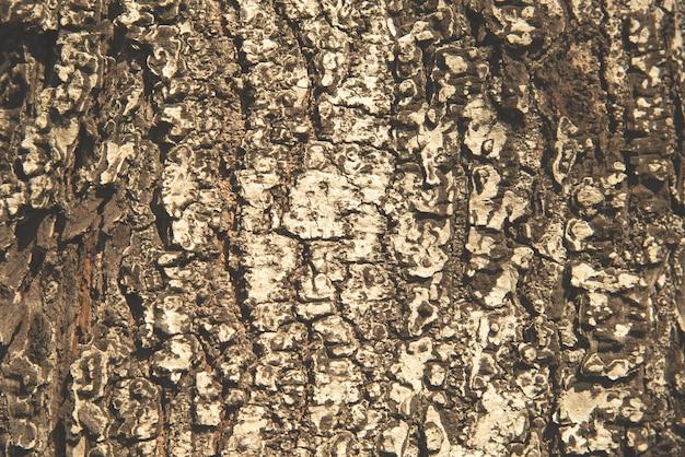 Lichtbruine boomschors textuur