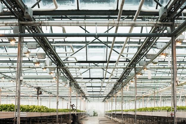 Lichte kas en de productie van groenten en fruit.