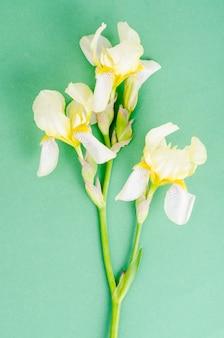 Lichtgele irisbloem op helder