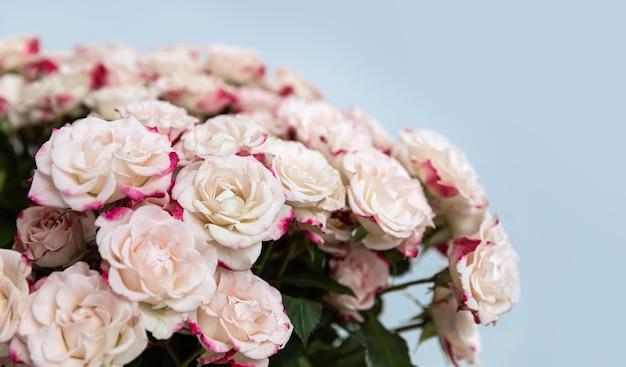 Lichtgele rozen met roze bloemblaadjes