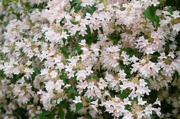 Lichtroze bloemen en groene bladeren als ondergrond op zonnige zomerdag