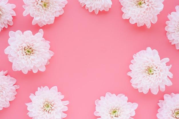 Lichtroze chrysantenbloemen op een roze achtergrond