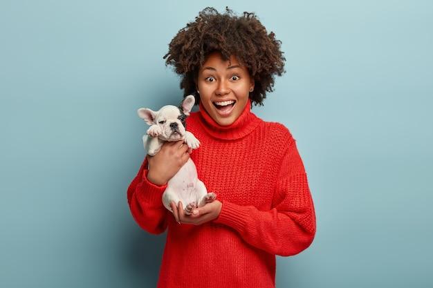 Liefde tussen baasje en hond. vrolijke vrouw met donkere huid houdt bulldog-puppy vast, heeft plezier, heeft dolgelukkig verrast uitdrukking als huisdier krijgt van vriend, geïsoleerd over blauwe muur.
