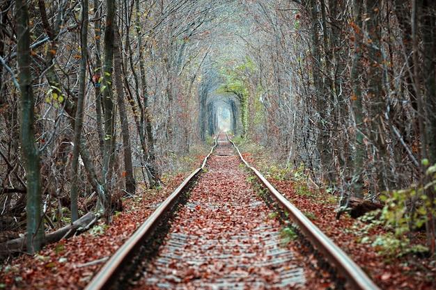 Liefdes tunnel in de herfst. spoorweg en tunnel van bomen