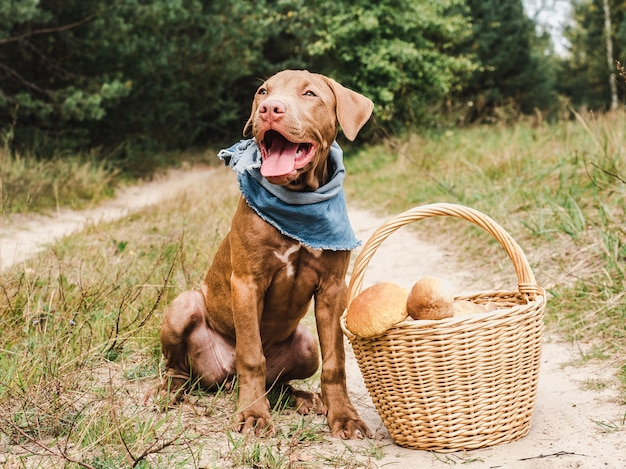 Lieve puppy in een prachtig bos