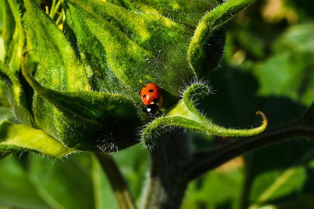 Lieveheersbeestje op groen blad
