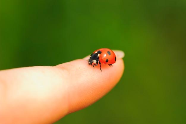 Lieveheersbeestje op vinger close-up. groen gras achtergrond