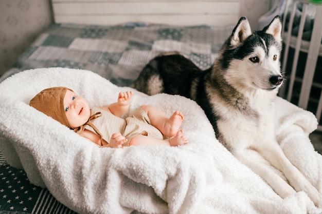 Lifestyle soft focus indoor portret van pasgeboren baby liggend in kinderwagen op bed samen met husky puppy klein kind en mooie husky hond vriendschap. aanbiddelijk grappig kind dat met huisdier rust.