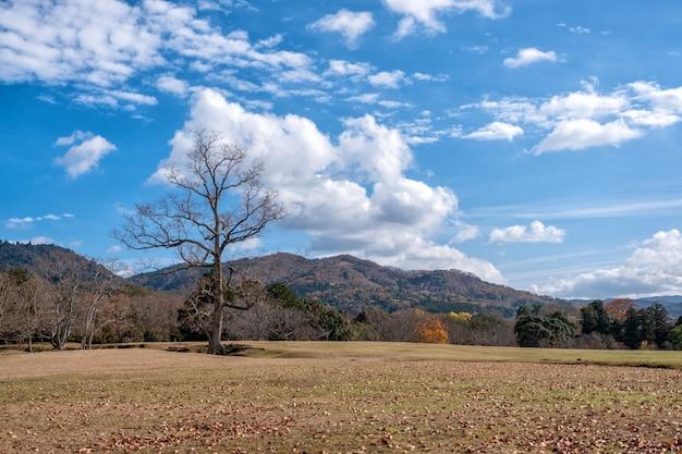 Liggend beeld van een enkele dode boomstam in een veld met blauwe hemelachtergrond