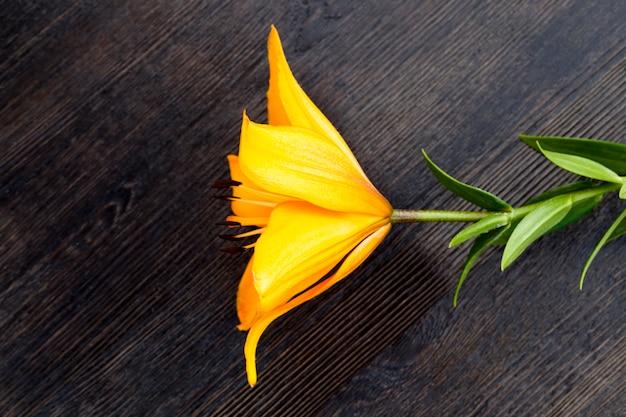 Liggend op een zwarte tafel oranje lelie, gescheurd in een boeket, close-up