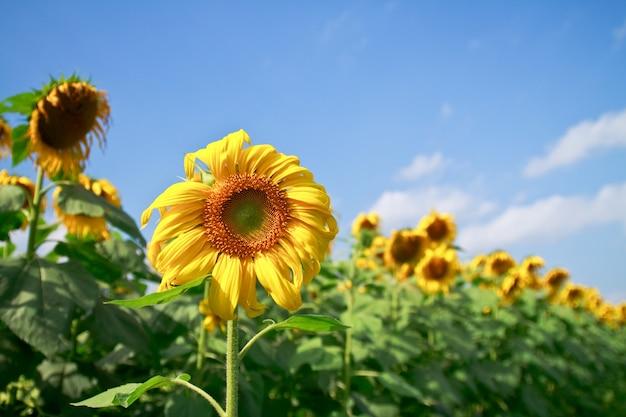 Light boerderij veld zonnestralen zon