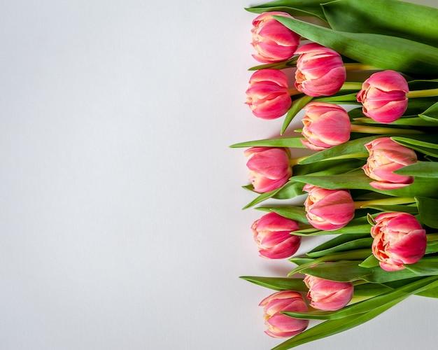 Lijn van roze-koraal tulpen op witte achtergrond voor wenskaart.