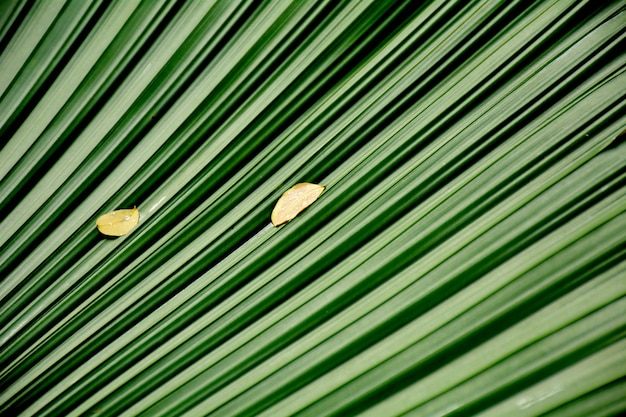 Lijnen en texturen van groene palmbladeren
