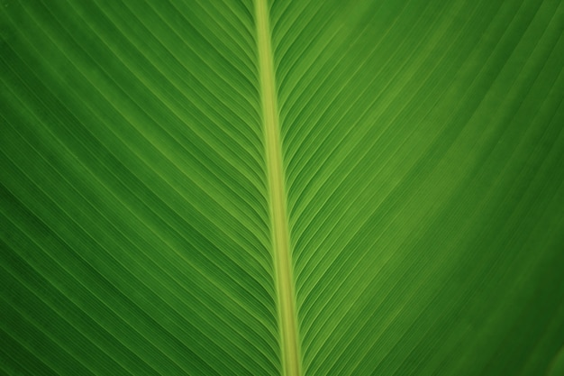 Lijnen en textuur van natuur groen blad gesloten