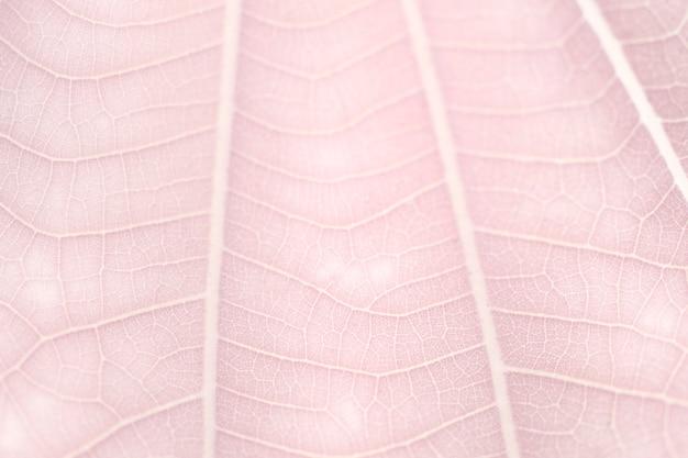 Lijnkunstpatroon op lichtroze dwergwitte bladtextuur macrofotografie