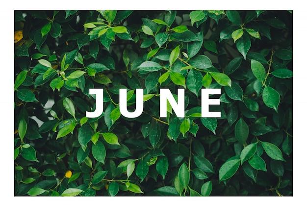 Lijst van kalendermaanden ontworpen op een natuurlijke groene bladachtergrond