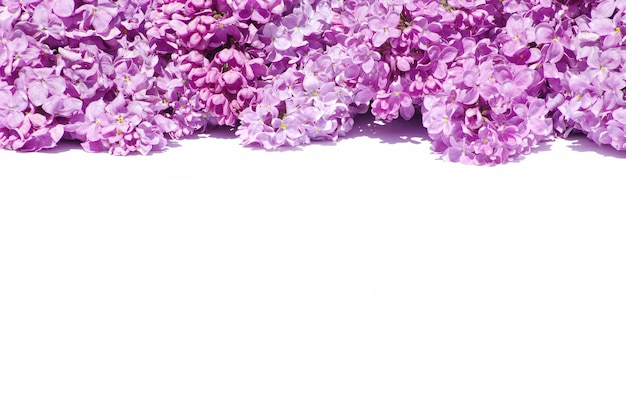 Lila bloem geïsoleerd op wit