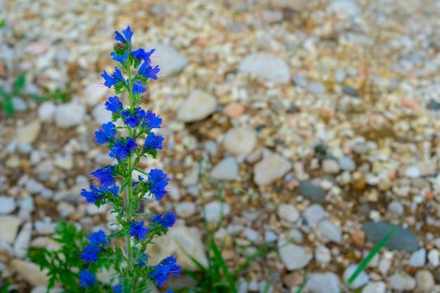 Lila groeiende en bloeiende bergbloemen