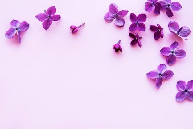 Lila in vlakke stijl op roze achtergrond. prachtige lente. bovenaanzicht. plat leggen, top. zomerseizoen. natuurlijke lentestijl.