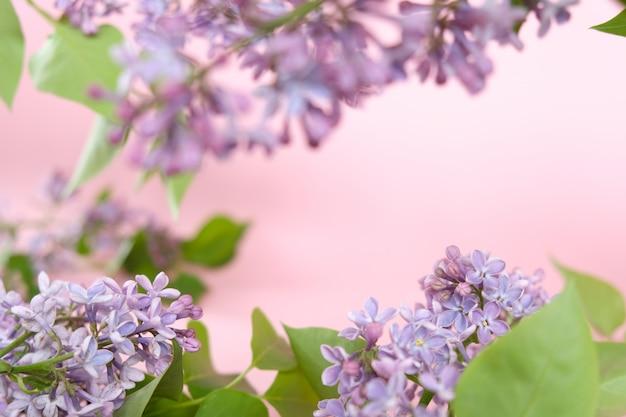 Lila. kleurrijke paarse seringen bloeit met groene bladeren.