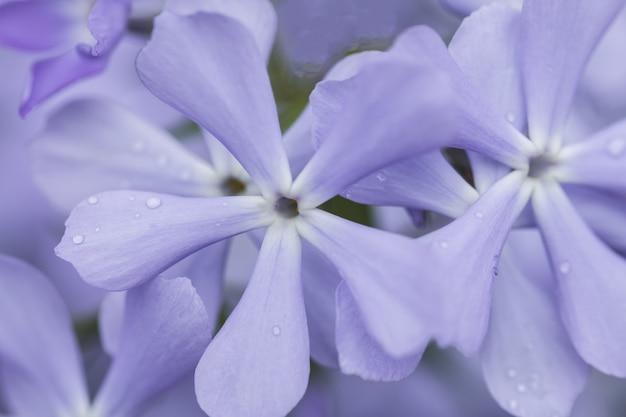 Lila, paarse en roze lila bloemen, bloemen van violet op een zonnige lente