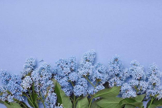 Lilac bloemen die op blauwe achtergrond liggen