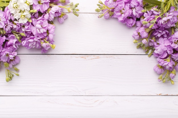 Lilac matthiola bloemen