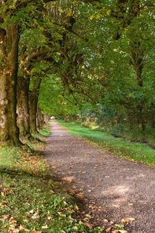 Linden alley in de argory gardens, national trust estate, nature park, national cultural reserve, in dungannon, county tyrone, noord-ierland, verenigd koninkrijk. zonnige dag in de vroege herfst