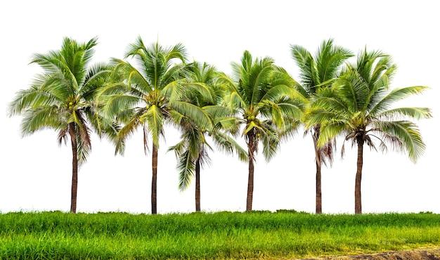 Line-up van kokospalm en grasland geïsoleerd op een witte achtergrond