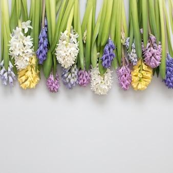 Lineaire compositie van prachtige hyacint zomerbloemen met stengels cirkel bloesem bloemen planten