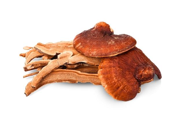 Lingzhi-paddenstoel, reishi-paddenstoel heeft eigendomsgeneeskunde.