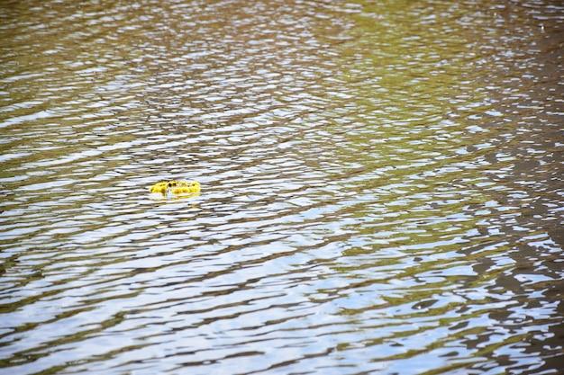 Links op het oppervlak van een meer of rivier drijft een feestelijke gele bloemenkrans