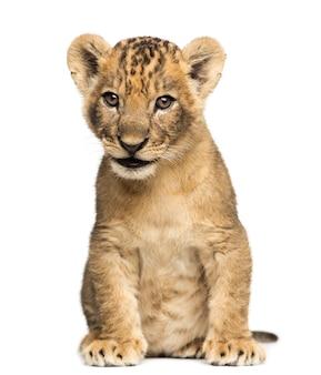 Lion cub vergadering geïsoleerd op wit