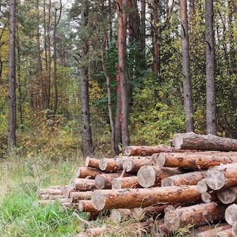 Logstammen stapelen de houthakkershoutindustrie houten stammen op de achtergrond van het herfstbos