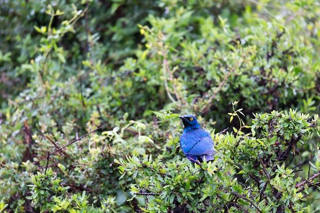 Lokale keniaanse vogels in kleurrijke kleuren zitten op de takken van een boom