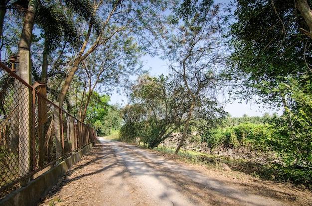 Lokale weg tussen het oerwoudbos in de zomertijd