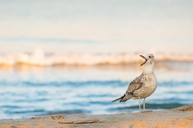 Lone zeemeeuw huilt staande op een zandige kust