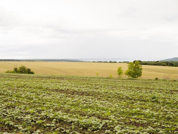 Long shot veld met verschillende planten