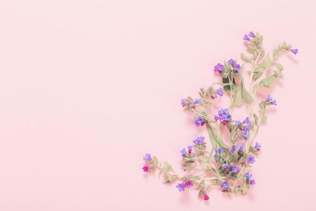 Longkruidbloemen op roze document oppervlak