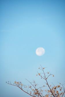 Loofbomen en zaden op de boom achtergrond maan bij daglicht op de heldere hemel.