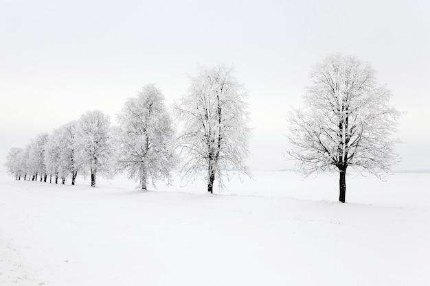 Loofbomen, gefotografeerd tijdens de winter. sneeuw op de grond