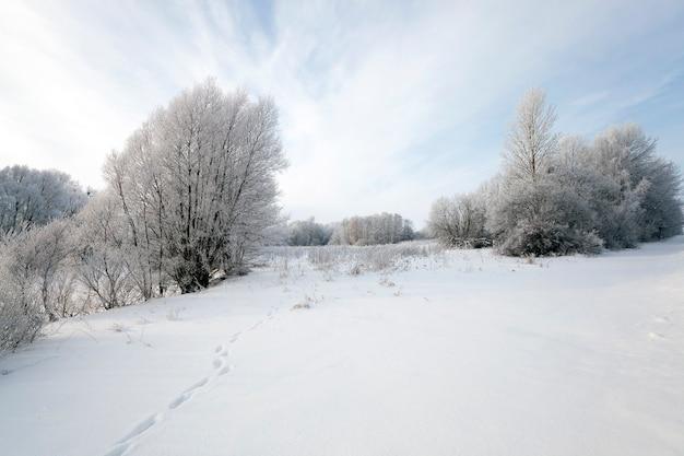 Loofbomen, gefotografeerd tijdens de winter.